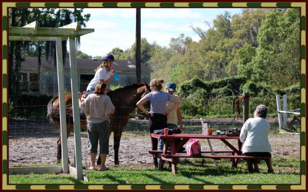 Hidden Meadow Farms   Plant City  Florida   Horseback Riding Lessons   Hunters  Jumpers  Showing  Boarding  Summer Camp. Hidden Meadow Farms   Plant City  Florida   Horseback Riding